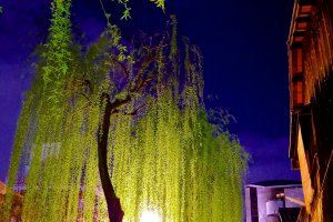 Gion Shirakawa street at night