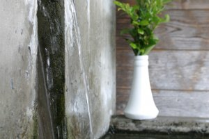 Secret to good sake is pure spring water.