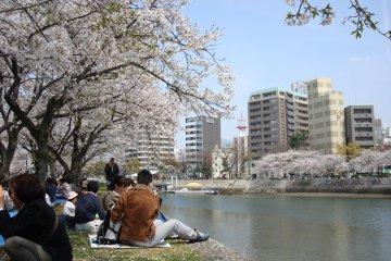 Hanami in Hiroshima Peace Park