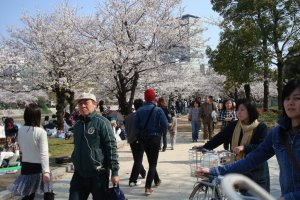 A busy afternoon in Hiroshima Peace Park during cherry blossom season.