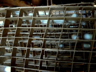 These are silkworm frames.