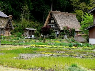 Thatched roof house beside a pond.