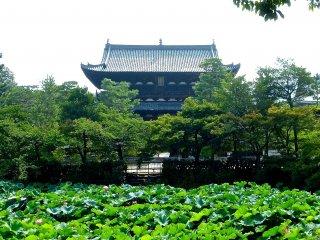 Un étang de lotus devant la porte Sanmon