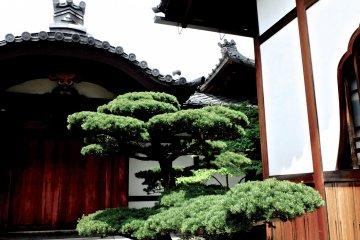 Myoshin-ji Temple & Complex - 4