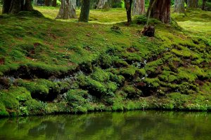 Moss growing over the collapsing bank