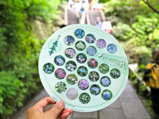 With paid admission, receive this adorable hand fan designed with photos of the hydrangeas in bloom.