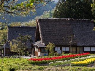 Gokayama fleuri