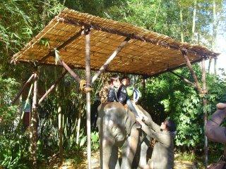 De futurs dresseurs d'éléphants