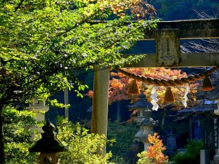 Sunlit maple leaves behind a stone torii