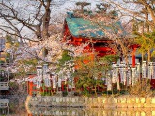 Kamakura Tsurugaoka Hachiman-gu