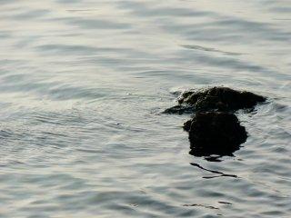 Au bord du lac, des rochers noirs apparaissent à la surface de l'eau