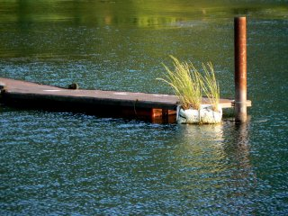 A l'extrémité de l'embarcadère, l'herbe capte les rayons du soleil en fin d'après-midi