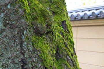 Kaneiji Konpon Chudo Temple in Ueno
