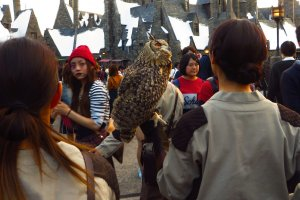 Another special feature at the Osaka Universal Studios is the real owls