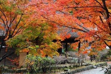 Autumn at Heike no Sato