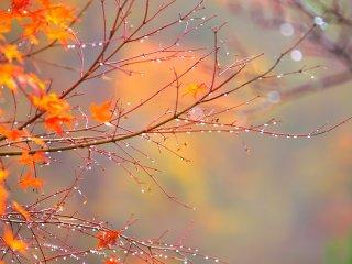 Rain drops shining on bare branches