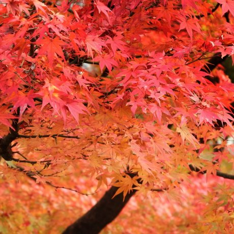 Autumn Colors of Nishiyama Park