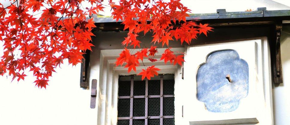 ฤดูใบไม้ผลิที่ชิเซ็นโดะในเกียวโต