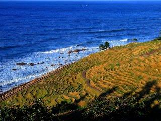 """""""Senmaida"""", les mille rizières en terrasse. Je reviendrai absolument ici pour voir la plantation du riz!"""