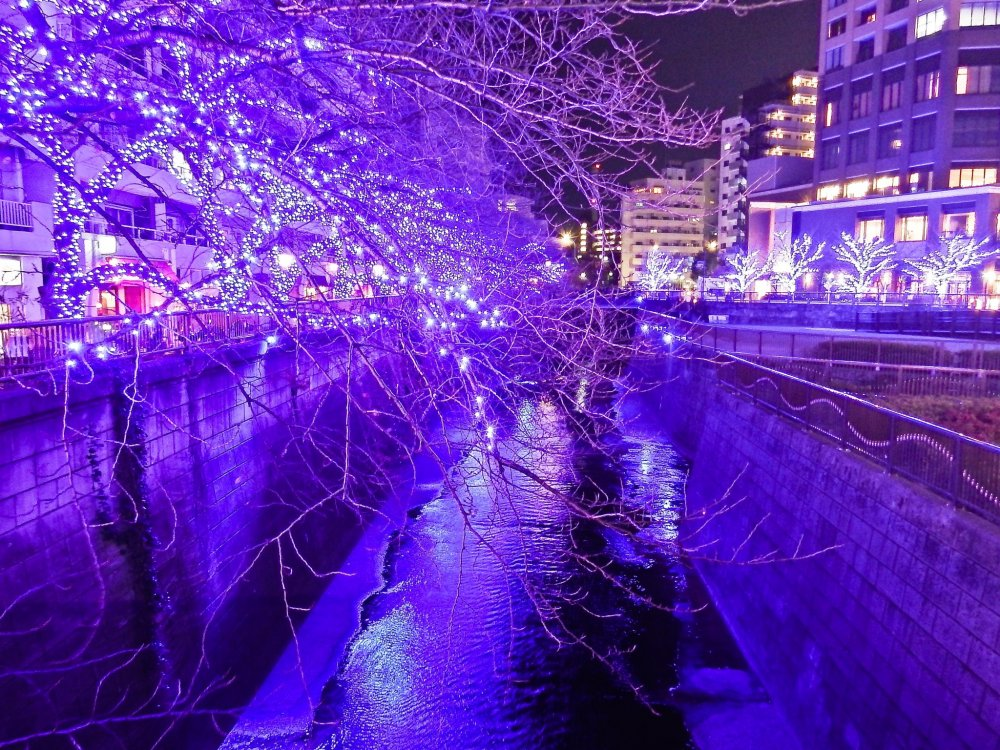 A short walk away from Naka-Meguro Station, this impressive display stretches for over 500 meters along the river