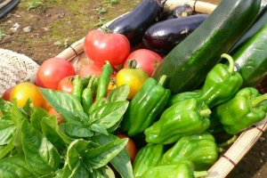 Seasonal vegetables grown without chemicals