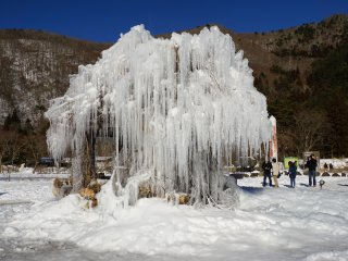 The Jyuhyo tree produces grand ice tree sculptures