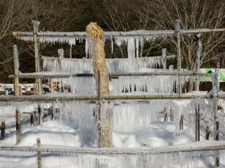 An icicle covered bamboo structure