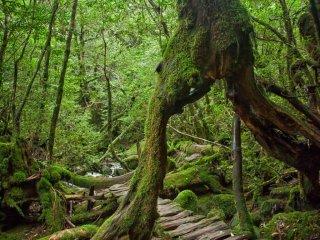 A walking tree!