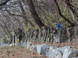 Ces statues de renards en pierre viendraient d'un peu partout dans le Japon. Lorsqu'elles sont trop vieilles ou qu'elles sont abimées, elles sont envoyées ici