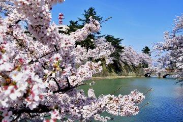 ปราสาทฟุคุอิในฤดูใบไม้ผลิ