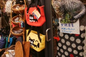 A shop displays cat bags and a sign appealing for homes for stray cats