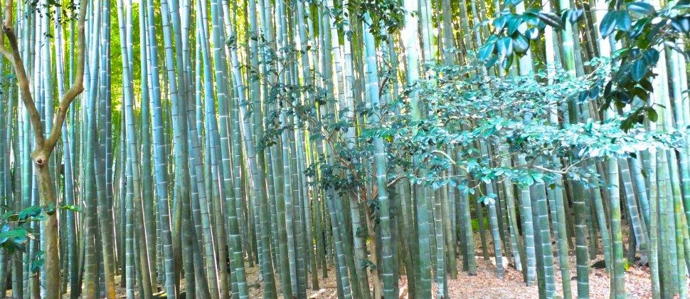 師走に見る鎌倉の竹寺
