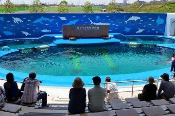Un nouvel aquarium ouvre à Sendai