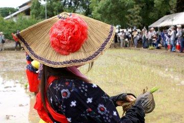 Фестиваль посадки риса Арао
