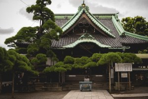 The temples main building with the famous 'Zui-ryu-no-matsu' tree