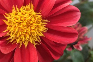 Summer Flowers in Chiba