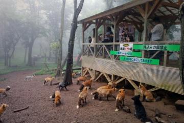 Fox Village ที่เที่ยวสำหรับคนรักหมา