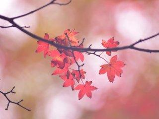 Листья меняют свой цвет