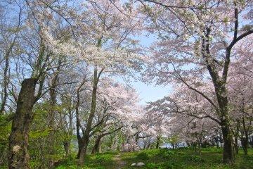 Sakura and Murakami Castle