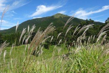 Les Hauteurs du Mont Aso en Automne