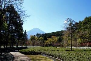 A beautiful garden with a beautiful mountain