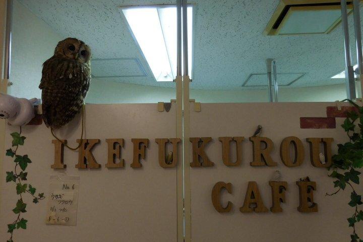 คาเฟ่นกฮูกที่อิเคบุคุโระ