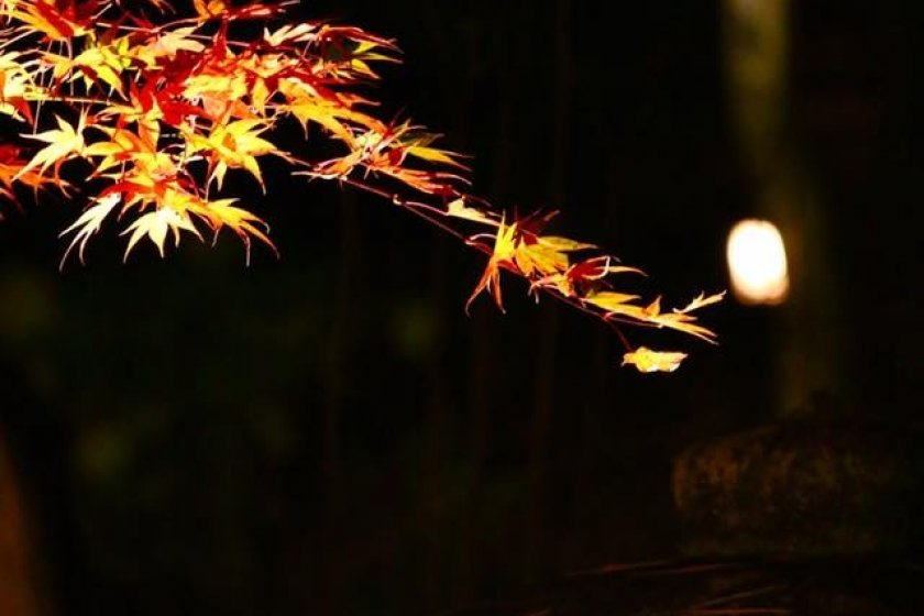 Lantern and leaves