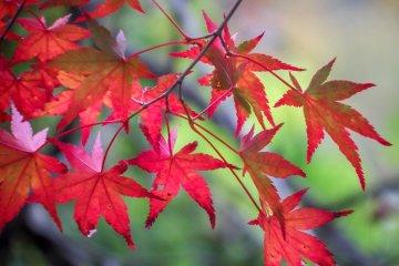 สีสันแห่งฤดูใบไม้ร่วงที่ Okutama
