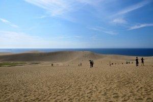 馬の背、一番高い砂丘