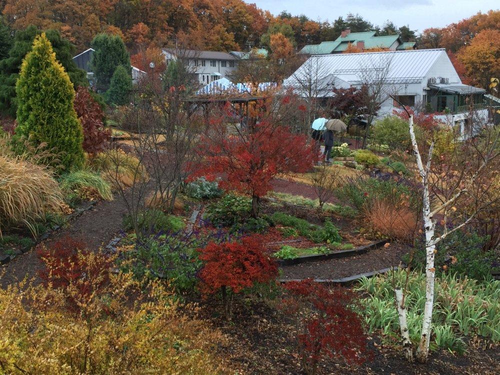 Вилла d'Est Winery из сада: Осенние цвета на деревьях, виноград снят с лоз