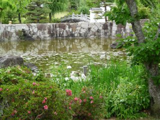 another view of the pond in the park