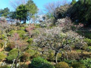Over 370 trees cover the hillside