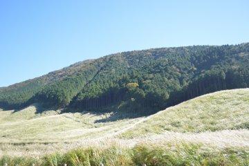 Sengokukogen Pampas Grass Fields