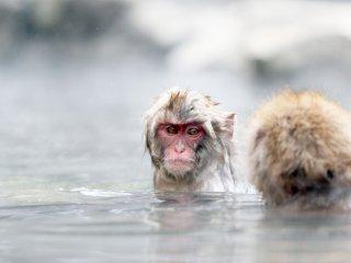 แม้ว่าจะมีใบหน้าเล็กๆ ที่ปกคลุมไปด้วยขน แต่สีหน้าของลิงก็ยังดูออก